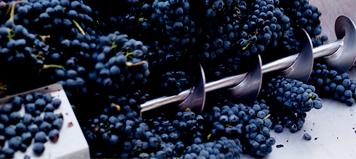 Biologisches Weingut